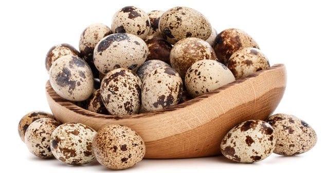 Dr. Ender Saraç Bıldırcın Yumurtasının faydaları