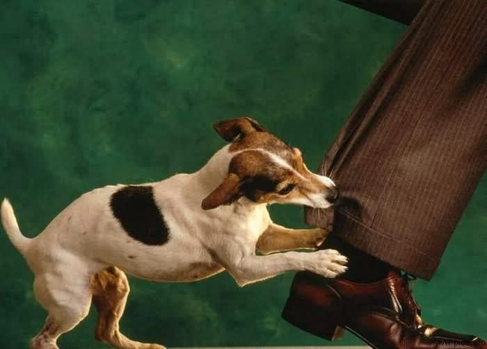 Rüyada Köpek Isırmasının Anlamı, Rüya Tabiri