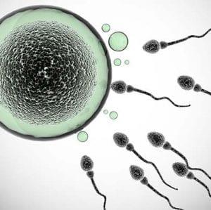Sperm Kalitesini Neler Olumlu Etkiler